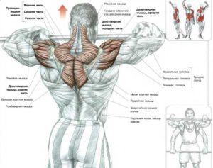 тяга штанги к подбородку для плечевых мышц