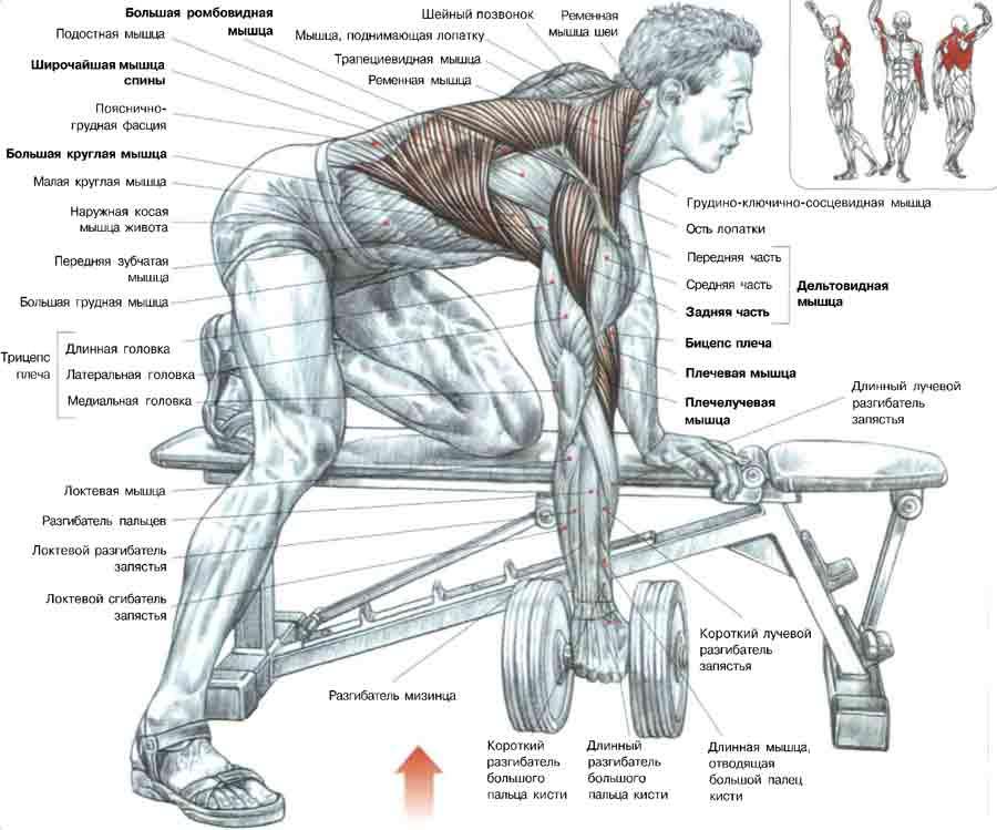 Качать мышцы спины в домашних условиях видео