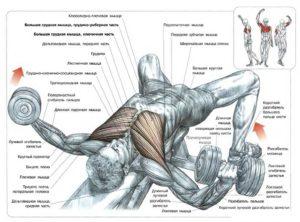 Разведение гантелей лежа для мышц грудной клетки