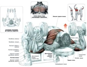 жим гантелей лежа для грудных мышц