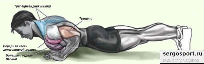 мышцы при отжимании от пола