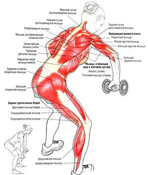 упражнение для мышц плеча