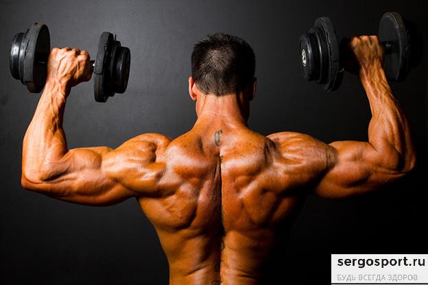 программа упражнений на развитие плечевых мышц