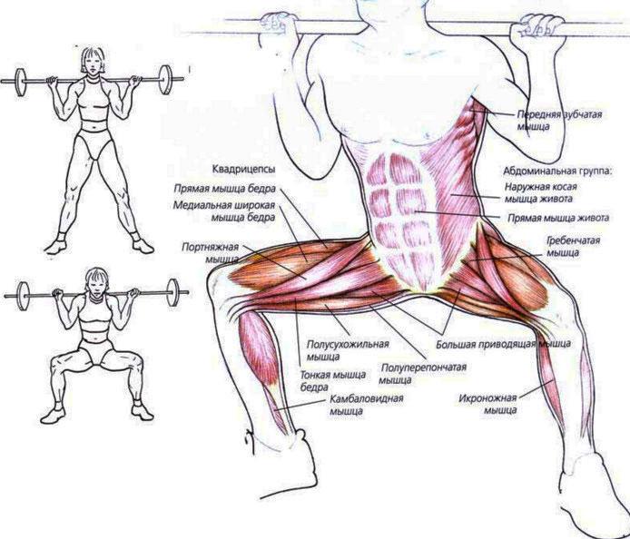 работующие мышцы плие приседания