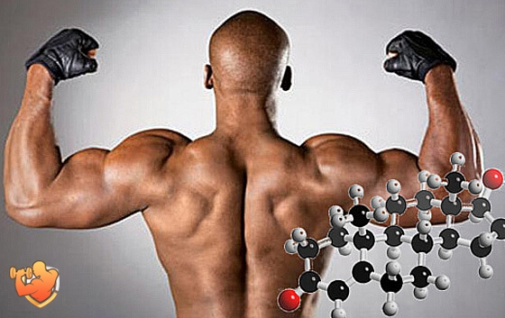 продукты повышающие уровень тестостерона у мужчин