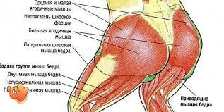 картинка анатомия мышц ног ягодицы