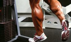 Анатомия мышц ног человека