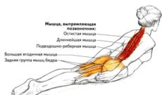 Мышцы выпрямители спины